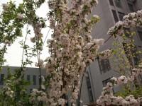 紫竹园小区效果图 (7)
